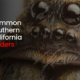 Common Southern California Spiders